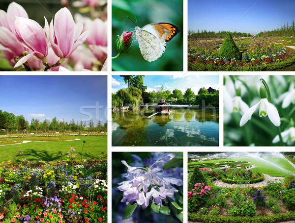 Stock photo: Flowers and gardens