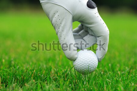 Golf Stock photo © brebca