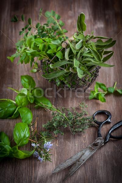 Gyógynövények klasszikus kert olló különböző friss Stock fotó © brebca