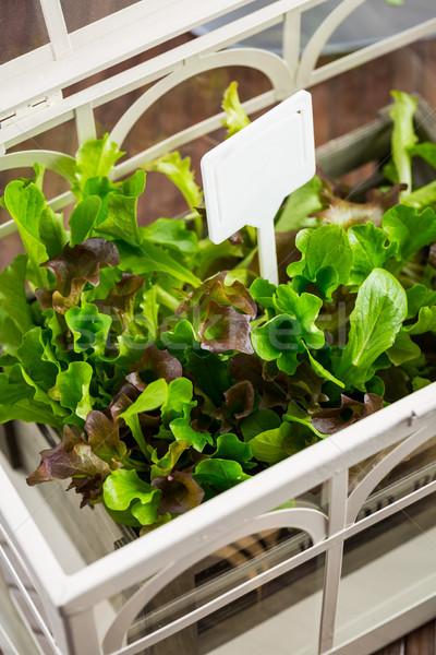 Vers salade broeikas detail tuin groene Stockfoto © brebca