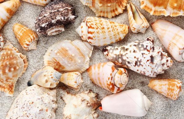 Foto stock: Conchas · praia · praia · natureza · mar · projeto