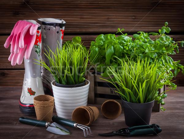Gardening Stock photo © brebca