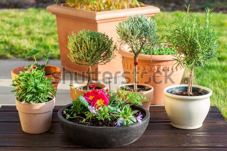 Outdoor flower pots Stock photo © brebca