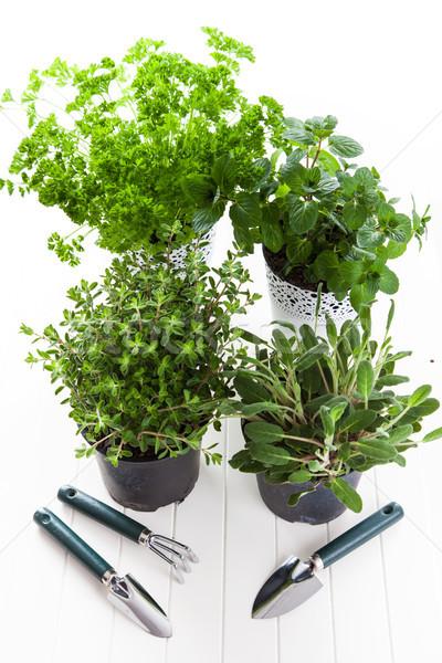 Foto stock: Ervas · jardim · ferramentas · primavera · comida