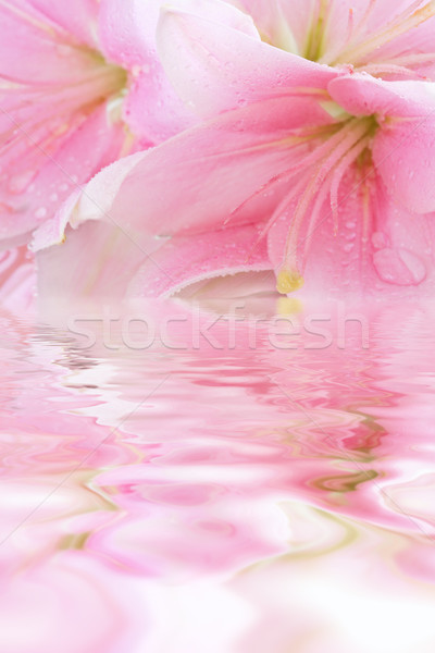 Photo stock: Floral · eau · réflexion · texture · nature · design