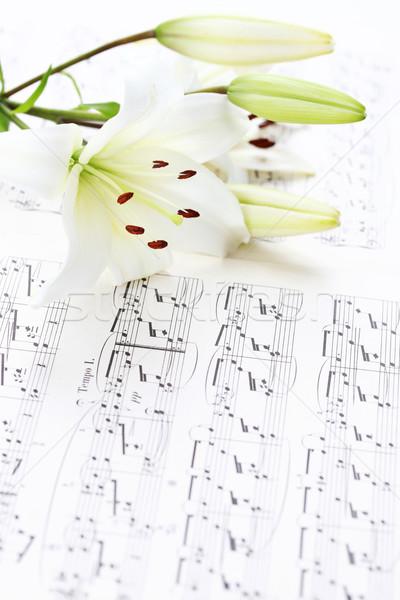 Muziek merkt witte lelie bloem spelen nota Stockfoto © brebca