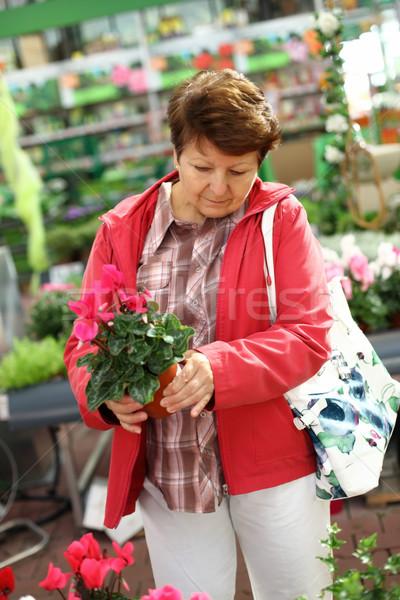Idős nő virágüzlet néz növények virág Stock fotó © brebca