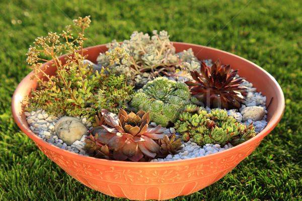Stock photo: Small rock garden