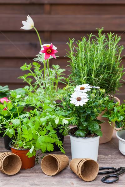 Növények virágok gyógynövények kert kertészkedés zöld Stock fotó © brebca