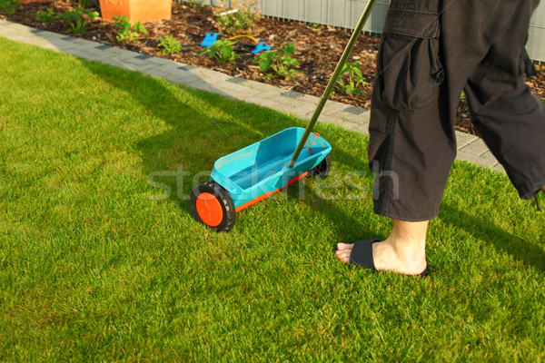Gardening - fertilizing lawn Stock photo © brebca