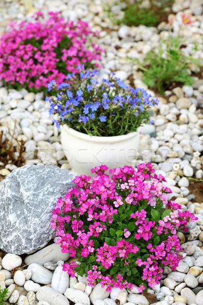 Rocha jardim belo cultivado telhado jardinagem Foto stock © brebca