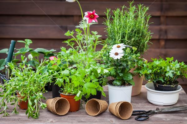 Plantas flores ervas jardim jardinagem verde Foto stock © brebca