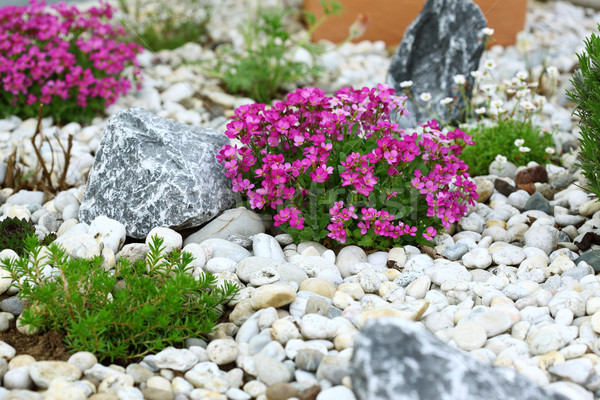Rock garden Stock photo © brebca