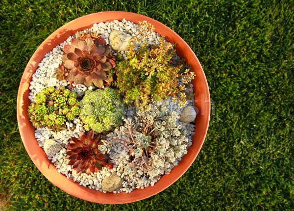 Small rock garden Stock photo © brebca