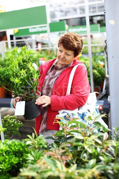 Supérieurs femme achat plantes jardin fleur Photo stock © brebca