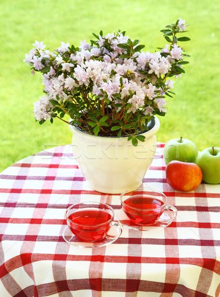 Thee geserveerd tuin twee bloem Stockfoto © brebca