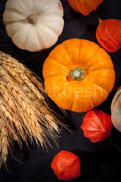 Pumpkins for Thanksgiving Stock photo © brebca