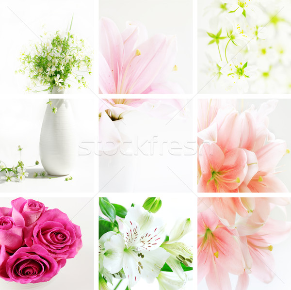 Flower collage Stock photo © brebca