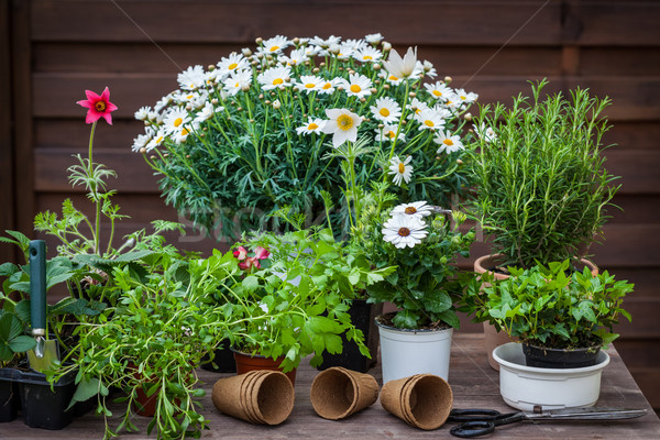 Plants with flowers and herbs in garden Stock photo © brebca