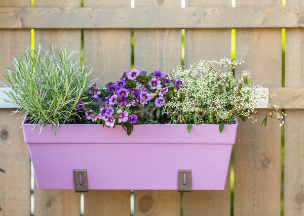 Flower pot hanging on wooden fence Stock photo © brebca