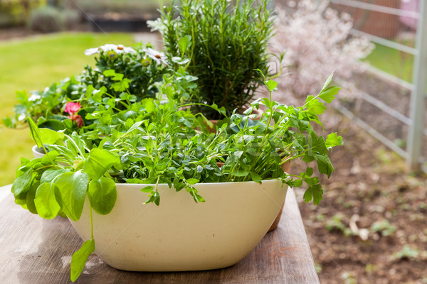 Foto d'archivio: Impianti · fiori · erbe · giardino · giardinaggio · verde