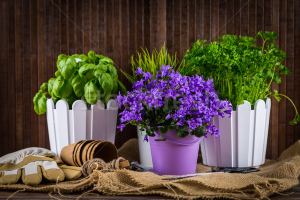 Planting flowers Stock photo © brebca