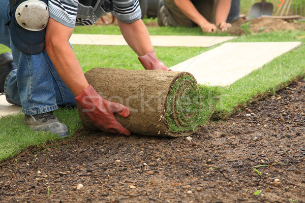 Laying sod for new lawn Stock photo © brebca