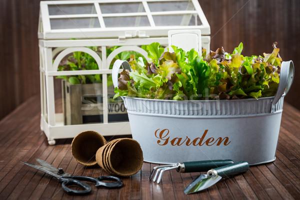 ストックフォト: 庭園 · ツール · 新鮮な · サラダ · 緑