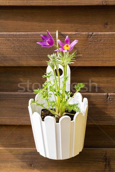 Virágcserép akasztás fából készült kerítés szabadtér kicsi Stock fotó © brebca
