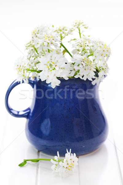 Fleurs du printemps vase table fleur eau nature Photo stock © brebca