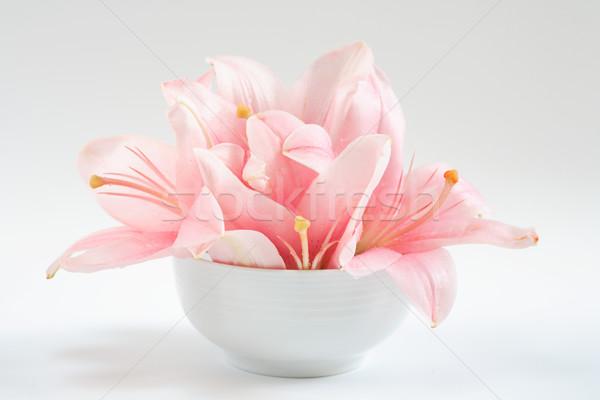 Harmonia równowagi medytacji charakter zdrowia tle Zdjęcia stock © brebca