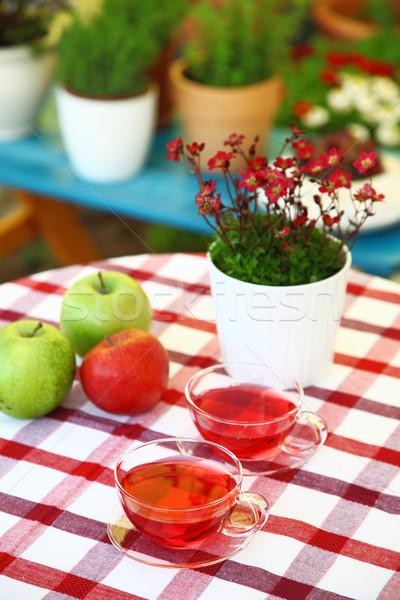 чай служивший саду два цветок Сток-фото © brebca