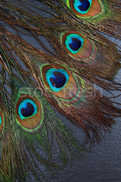 Belle exotique paon plumes yeux sombre Photo stock © brebca