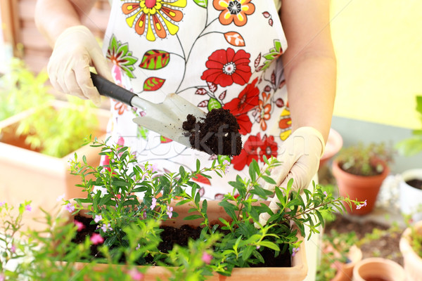 Idős nő virágok jobb növekedés tavasz munka Stock fotó © brebca