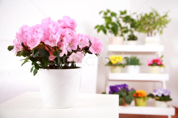 Flowers in interior Stock photo © brebca