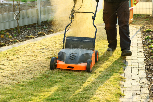 Kwaliteit gazon gras home veld park Stockfoto © brebca