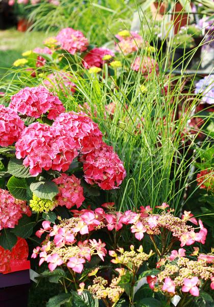 Parterre de fleurs belle jardin parc printemps herbe Photo stock © brebca