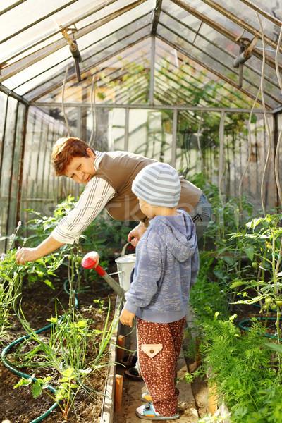 Gardening with granny Stock photo © brebca