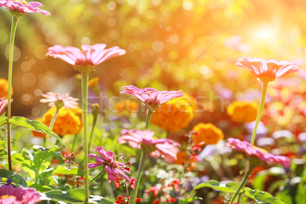 Abstract flowerbed in sunny day Stock photo © brebca