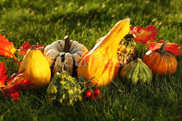Şükran Günü natürmort çim ev meyve Stok fotoğraf © brebca
