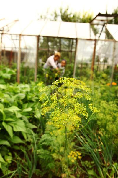 Garden Stock photo © brebca