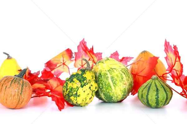 Thanksgiving Stock photo © brebca