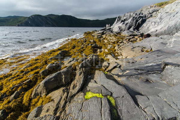 Rugged Newfoundland Shore Stock photo © brianguest
