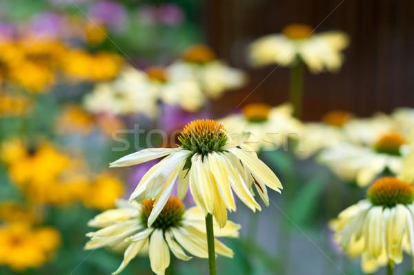 Kwiaty ogród rozwój płatki nikt Zdjęcia stock © brianguest