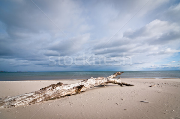 Driftwood on a Beach with Cloudy Sky Stock photo © brianguest