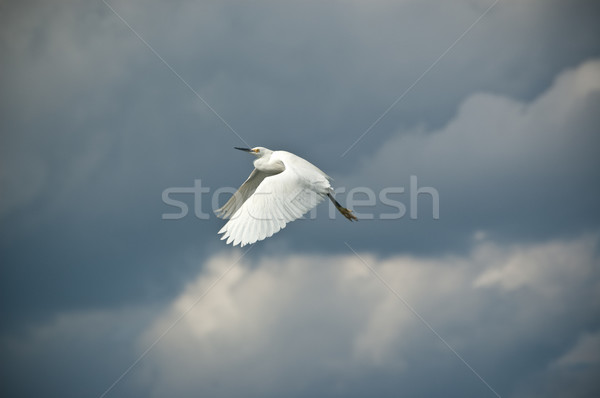 Vuelo despegue tempestuoso nubes cielo naturaleza Foto stock © brianguest