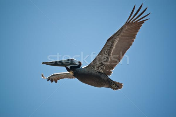 Vlucht boven Florida strand natuur Stockfoto © brianguest