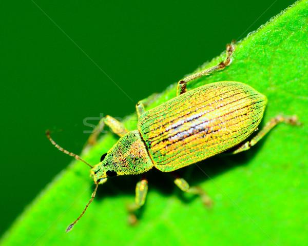 Beetle Stock photo © brm1949