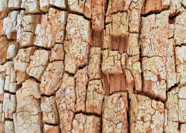 ツリー 樹皮 コピースペース テクスチャ 木材 ストックフォト © brm1949