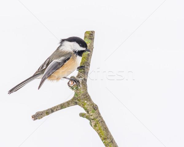 Doğa kuş hayvan orman açık havada Stok fotoğraf © brm1949